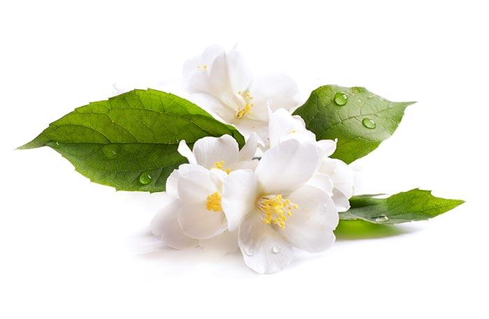 Floral Tributes